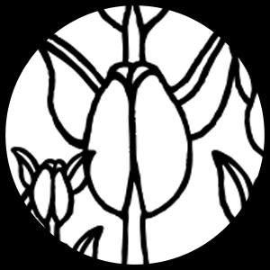 Kapualiko Icon on Transparent Background